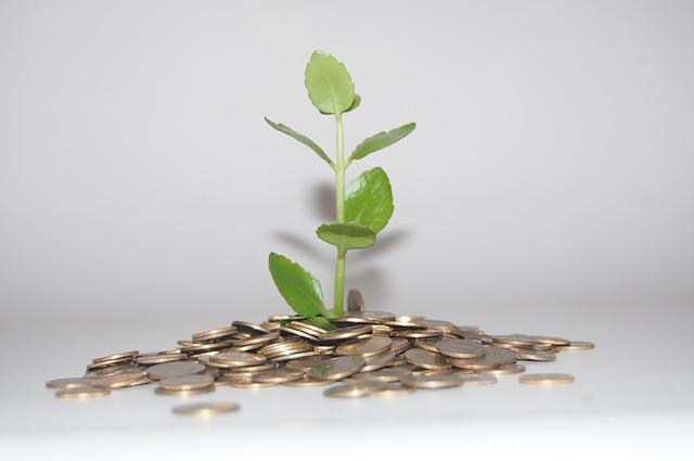 peníze a rostlina